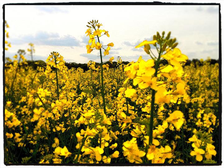 les champs près de l'atelier anybodesign