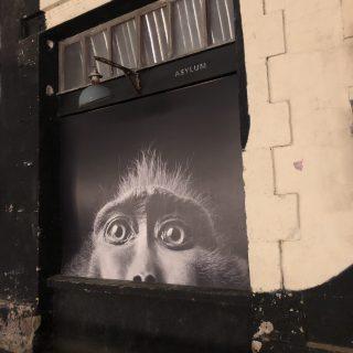 peinture murale de tête de singe, gros plan sur les yeux